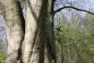 Dookoła jez. Włókna,Góra Zamkowa - wiosna w Skokach :: Rajd w Skokach
